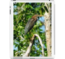 Green Heron on the Scuppernong iPad Case/Skin