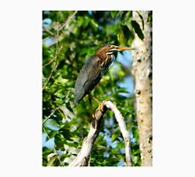 Green Heron on the Scuppernong Unisex T-Shirt
