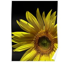 Circling Sunflower Poster