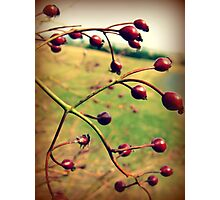 Autumns Harvest Photographic Print