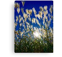 October Prairie Canvas Print