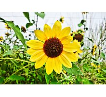Wyoming Summer Bloom  Photographic Print