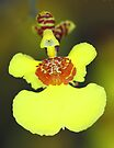 Yellow Orchid Macro by Carole-Anne