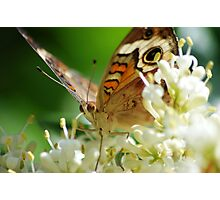 Butterfly album, butterfly Nr.1 Photographic Print