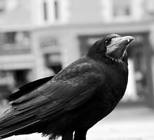 Quoth the raven, Nevermore by CptSmee