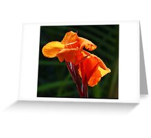 Canna In Sunlilght Greeting Card