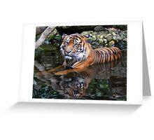 Sumatran Tiger Keeping Cool In Summer Greeting Card