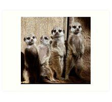 Baby Meerkats With Attitude Art Print