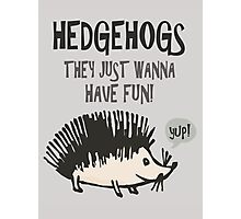 Hedgehogs They Just Wanna Have Fun! Photographic Print