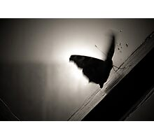 Trapped Butterfly Photographic Print