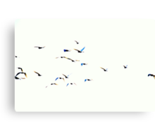flock of birds in the sky Canvas Print