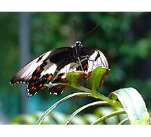 Butterfly #2  Photographic Print