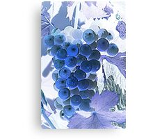 ripe grape vineyard will Canvas Print
