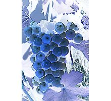 ripe grape vineyard will Photographic Print