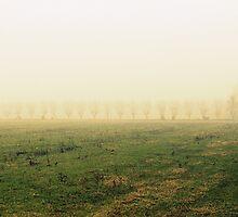 fields in the fog in winter by spetenfia