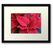 poinsettia flower Framed Print