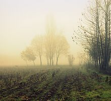 fields in the fog in winter by spetenfia