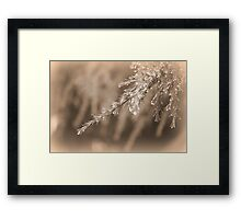 pine leaves under rain Framed Print