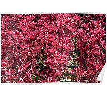Texture with red flowers and leaves Poster