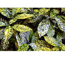 Green leaves with yellow spots texture Photographic Print