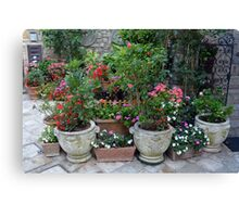 Flowers in pots on the streets of Assisi, Italy Canvas Print