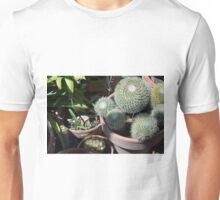 Many cacti in pots, natural background Unisex T-Shirt