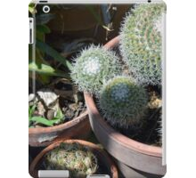 Many cacti in pots, natural background iPad Case/Skin