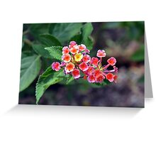 Small delicate flowers, natural backround Greeting Card