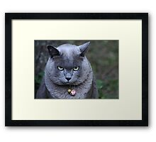 Just a Bit Grumpy! Framed Print