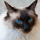 Old Blue Eyes by DavidsArt