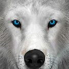 Arctic Wolf by Vac1