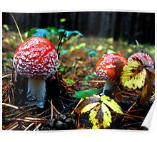 fun spotted fly agaric in the autumn forest Poster
