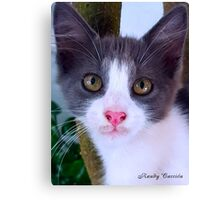 The Kitty Canvas Print