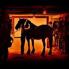 Grooming The Mighty Percheron by Al Bourassa