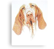 Bracco Italiano Canvas Print