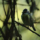 Blue Tit Autumn Evening by Adrian Wale