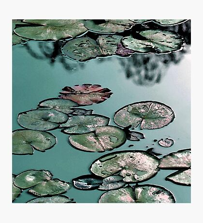 Shining green waterlily pond Photographic Print