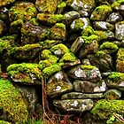 Stone wall covered in moss. by Karen  Betts