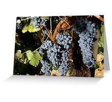 Grapes Vineyard  Greeting Card