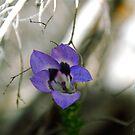 Violet Star by CrismanArt