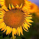 Golden Sun by John  De Bord Photography