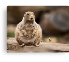 So I'm a Little Short for my Weight Canvas Print