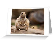 So I'm a Little Short for my Weight Greeting Card