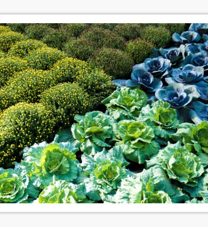Cabbage Patch Geometry Sticker