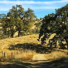 golden rolling hills of California by David Chesluk