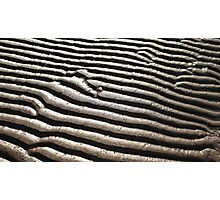 sand pattern zebra Photographic Print