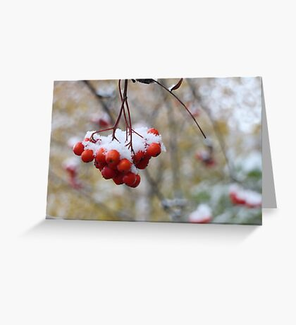 bright mountain ash under snow Greeting Card