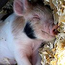 Happy As A Hog by © Loree McComb