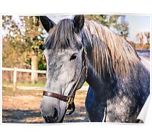 Equine Greeting Poster
