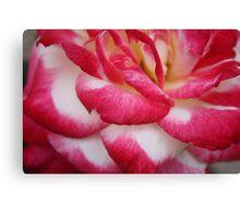 Folding Pink Rose Canvas Print